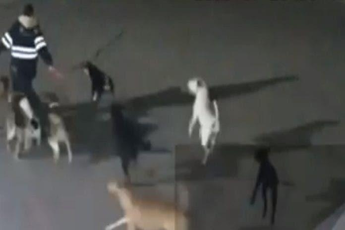 Alrededor de una decena de perros atacó a Isabel.