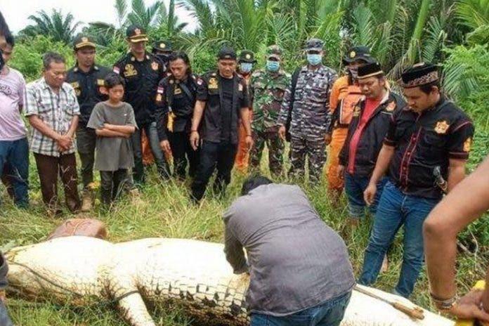 portada-cocodrilo-come-niño-indonesia