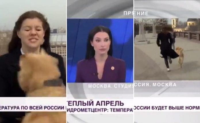 perro-roba-micrófono-moscu