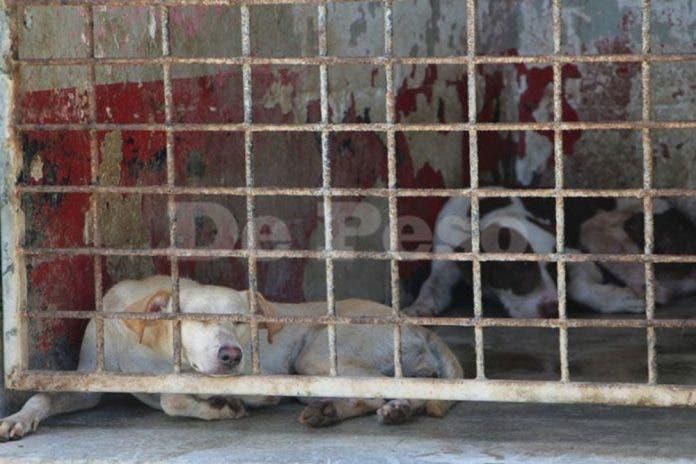 """Acusan a albergue de """"matar de hambre"""" a perros y gatos rescatados"""