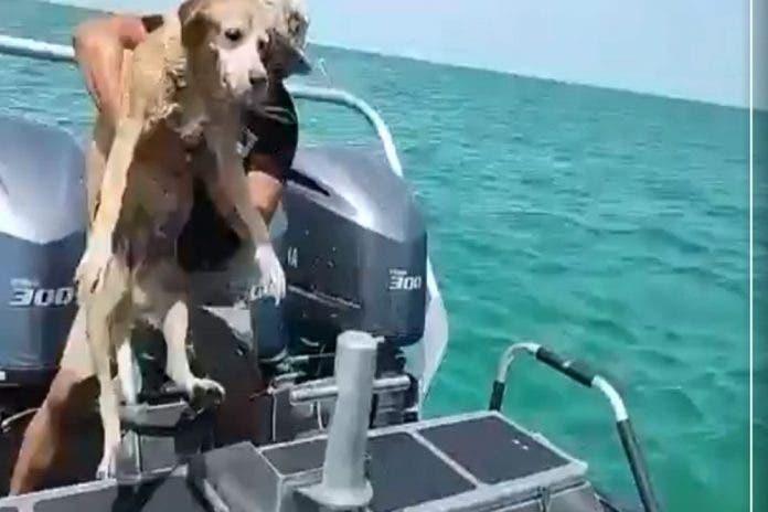 Perro rescatan Playa Yucatán