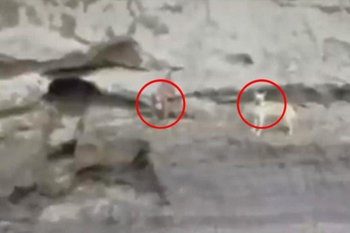 Dron localiza vivos a perritos que cayeron al socavón de Puebla
