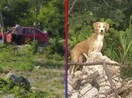 Exhiben en redes a sujeto por abandonar a su perro en Mérida