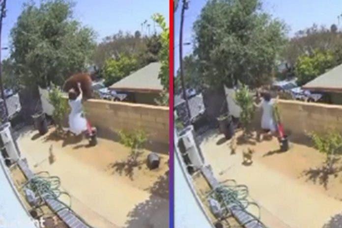 Mujer empuja a osa gigantesca para salvar a sus perritos