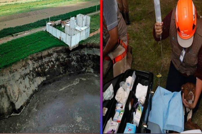 Rescatan a dos perritos que cayeron al socavón en Puebla