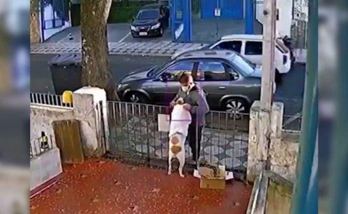 Video: Sujeto engaña vilmente a perrito para robarle su ropa