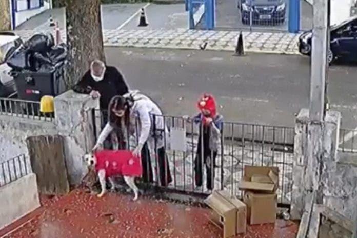 Familia le regala suéter a Nina perrita asaltada por maleante
