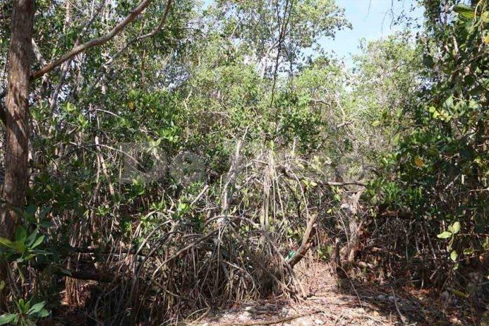 manglar madera Cancún