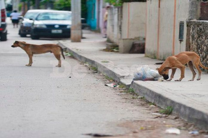 Esta es la región de Cancún con más casos de maltrato animal
