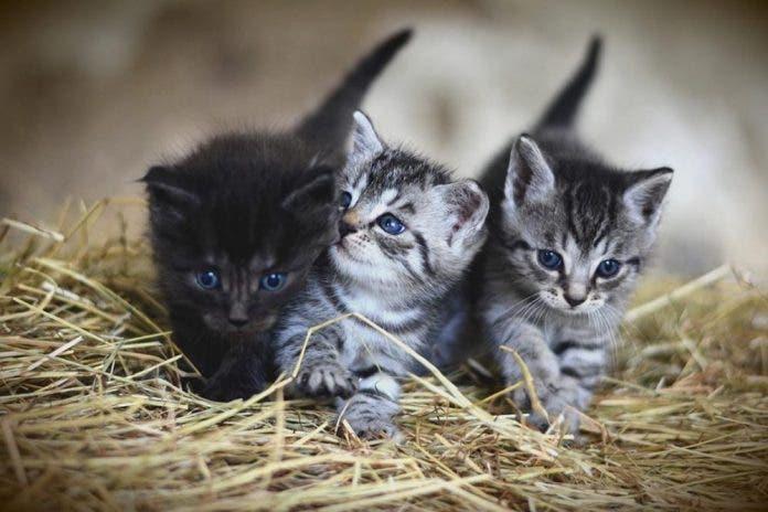 Quemó vivos a varios gatos entre ellos recién nacidos en Morelos