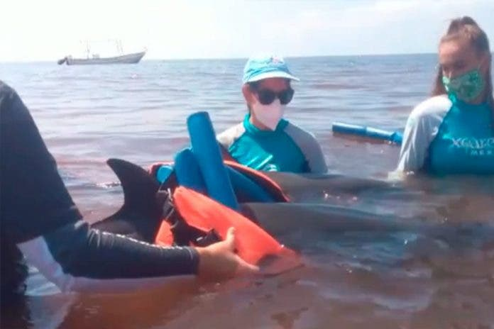 Denuncian Dolphin Discovery
