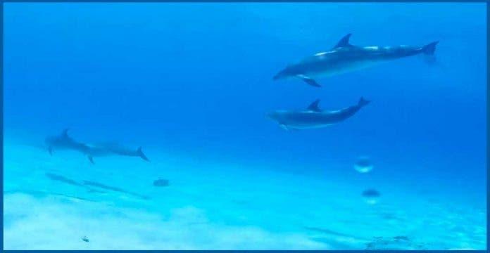 Captan a familia de delfines en costas de Cozumel
